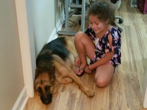 german shepherd socialization training